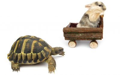 The Tortoise and The Hare and Google Entitlement Mentality
